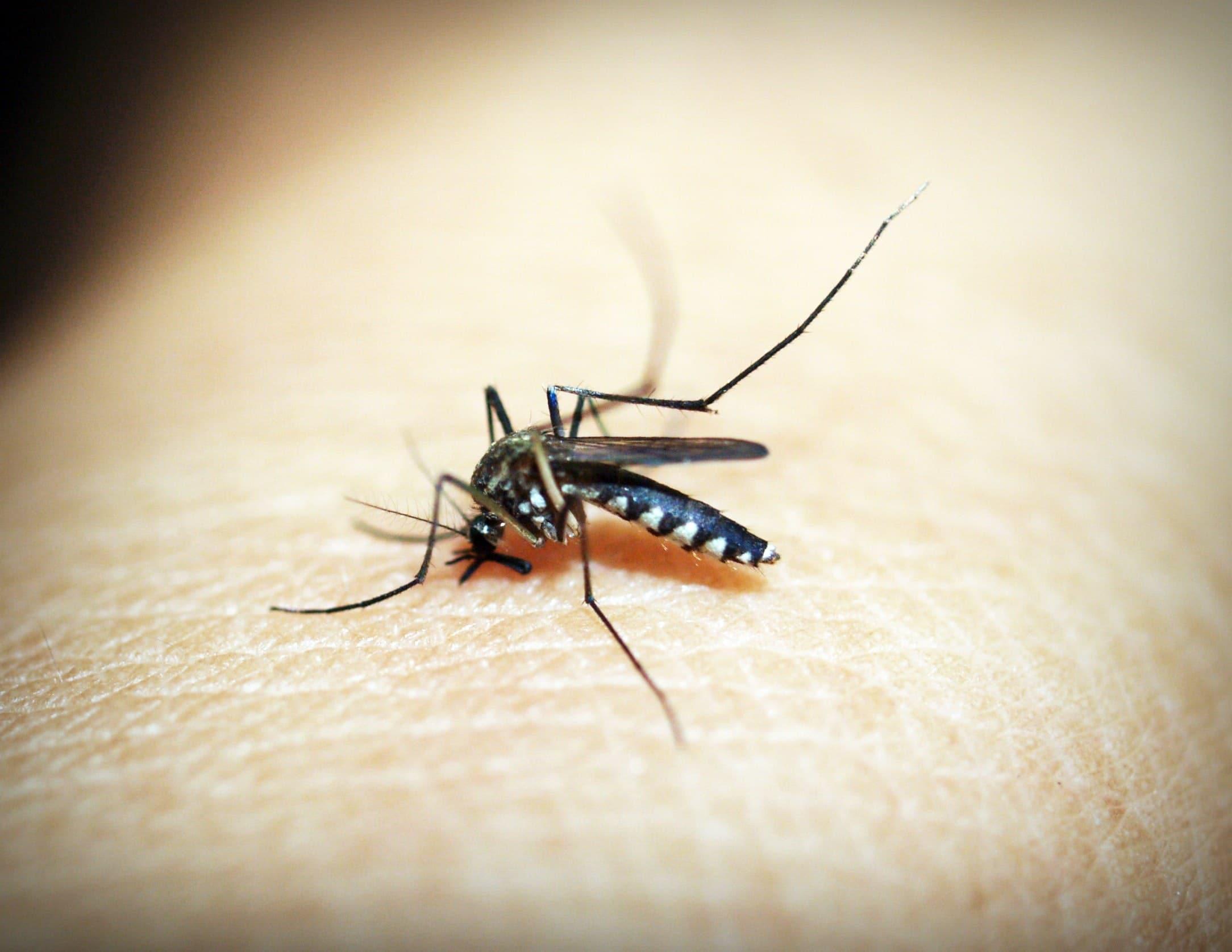 Best Mosquito Repellents UK