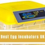 Best Egg Incubators UK