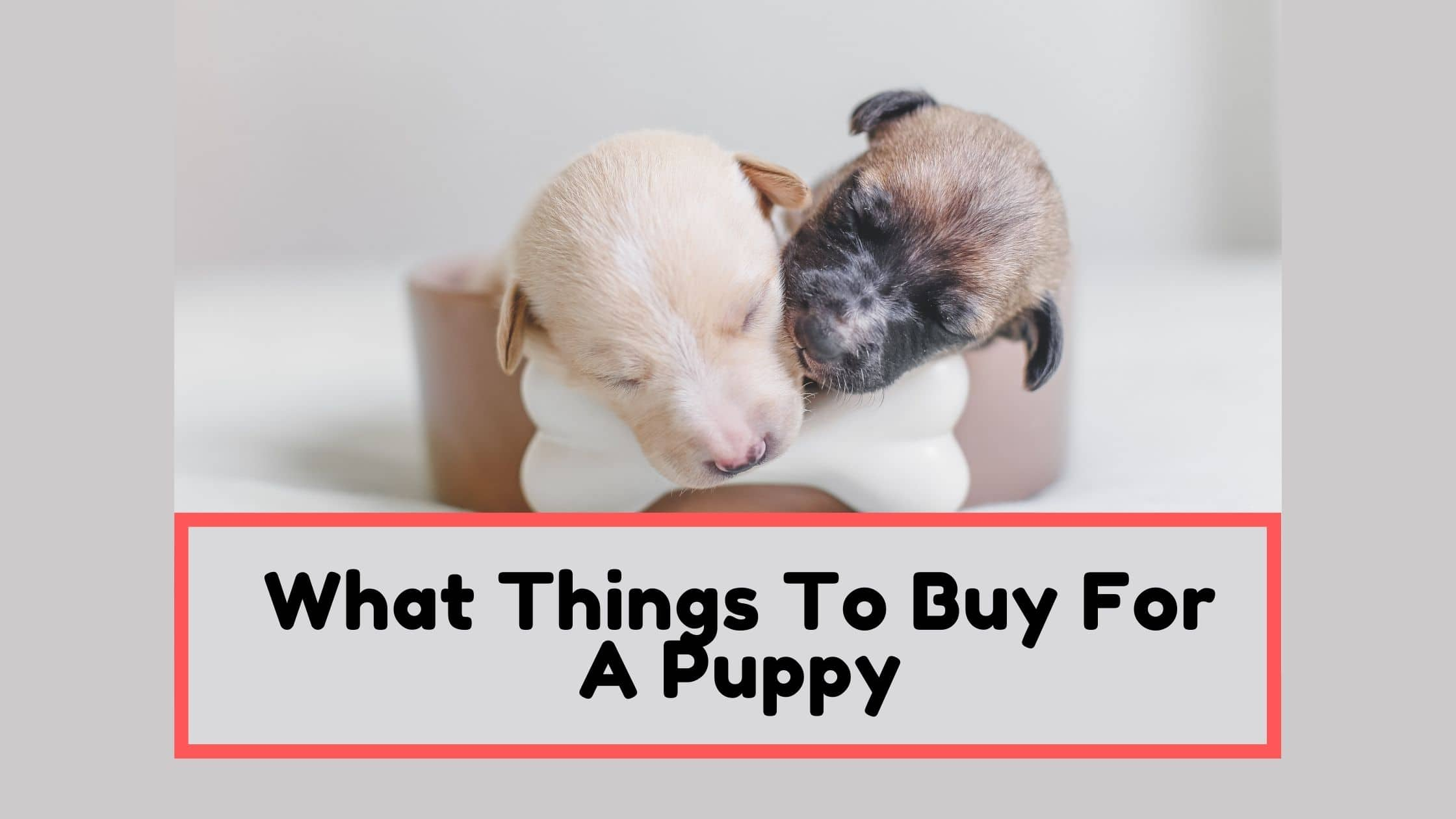 What Things To Buy For A Puppy