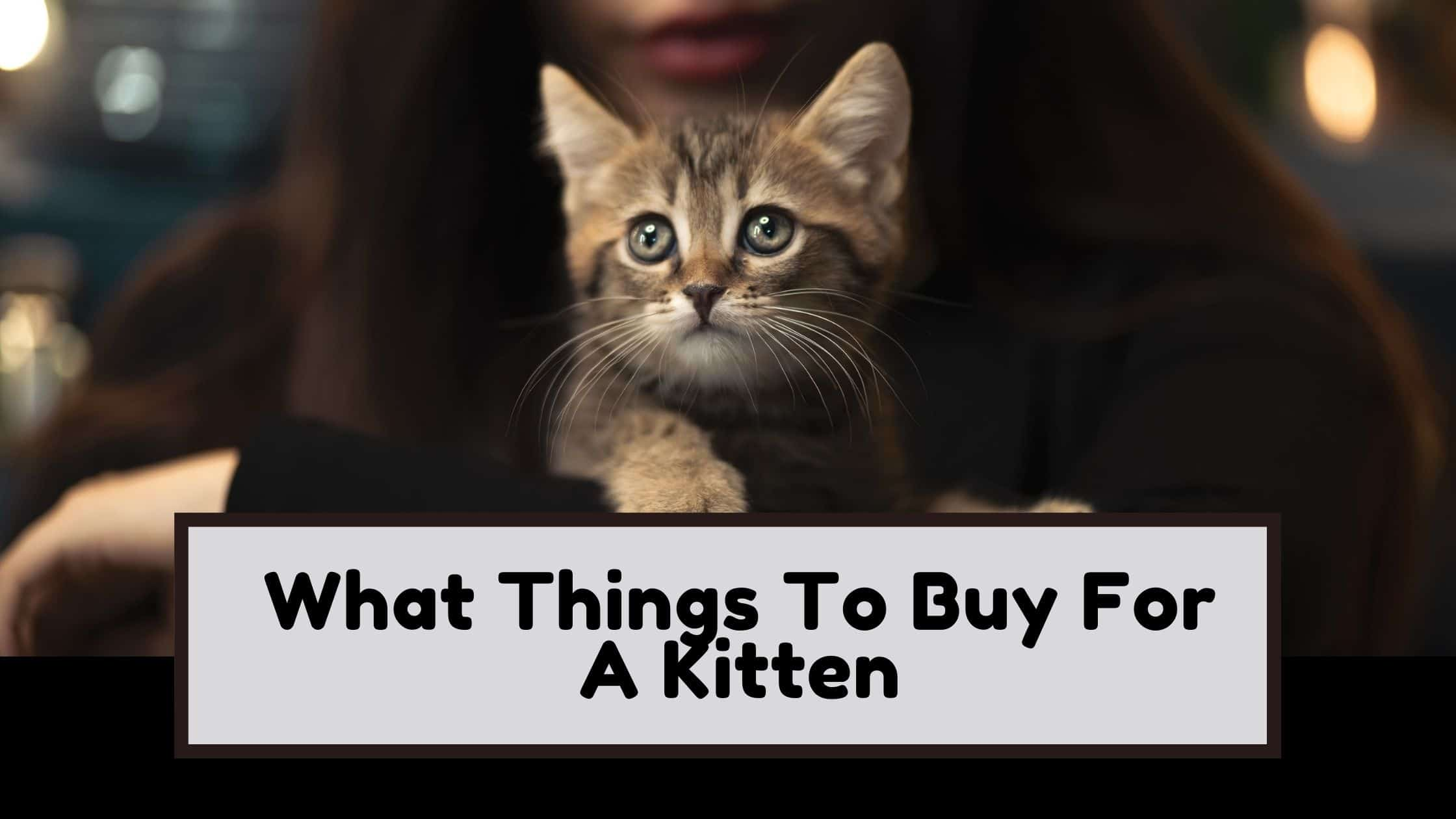 What Things To Buy For A Kitten