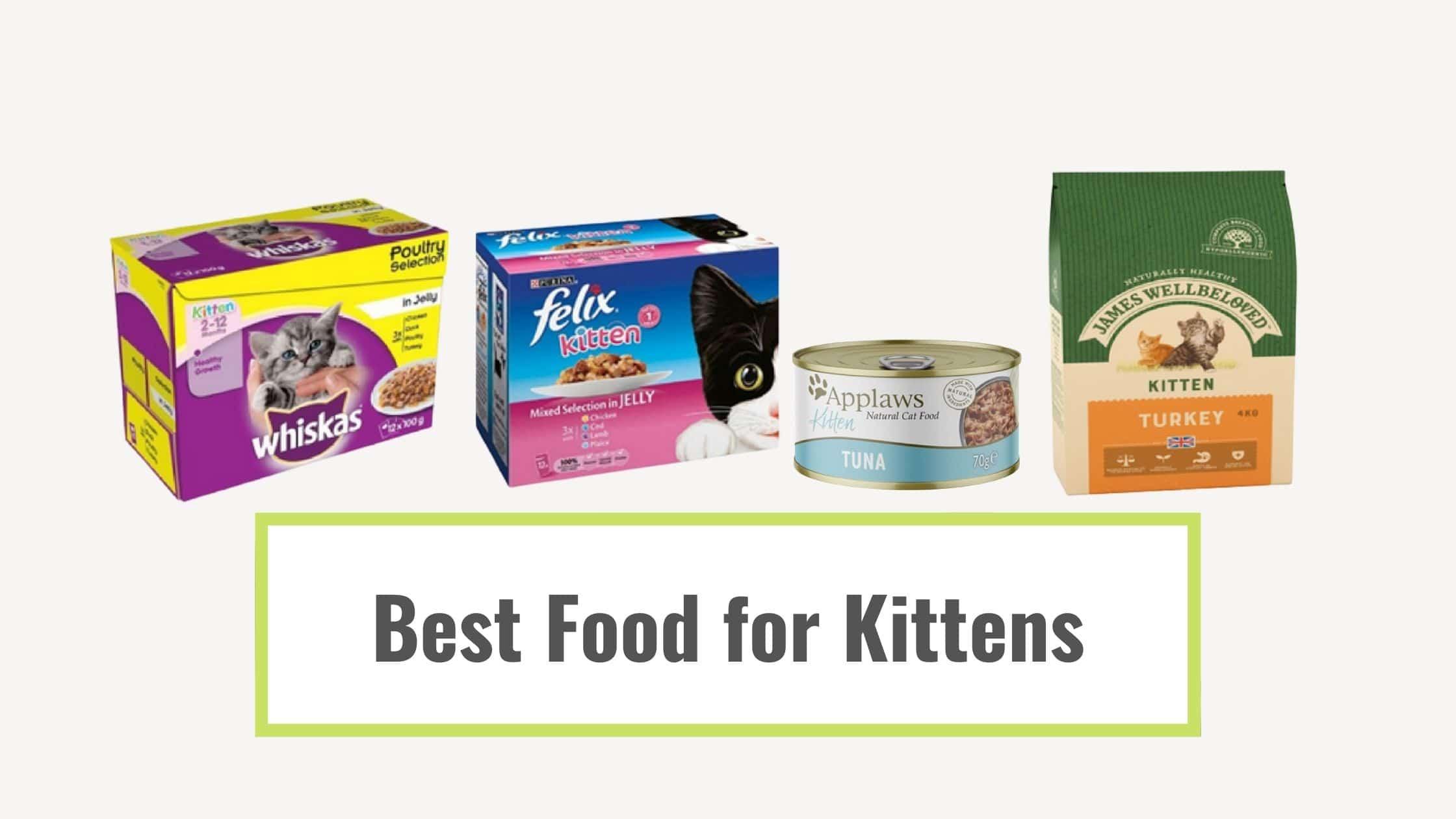 Best Food for Kittens